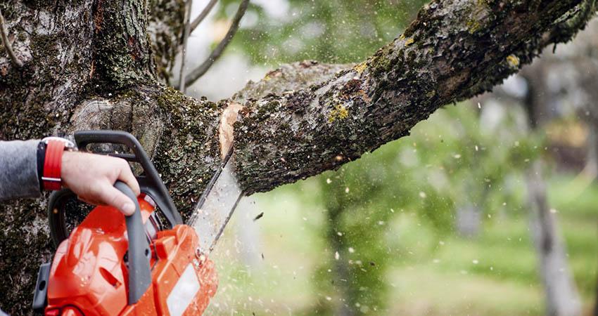 Leogarden potatura e abbattimento alberi roma